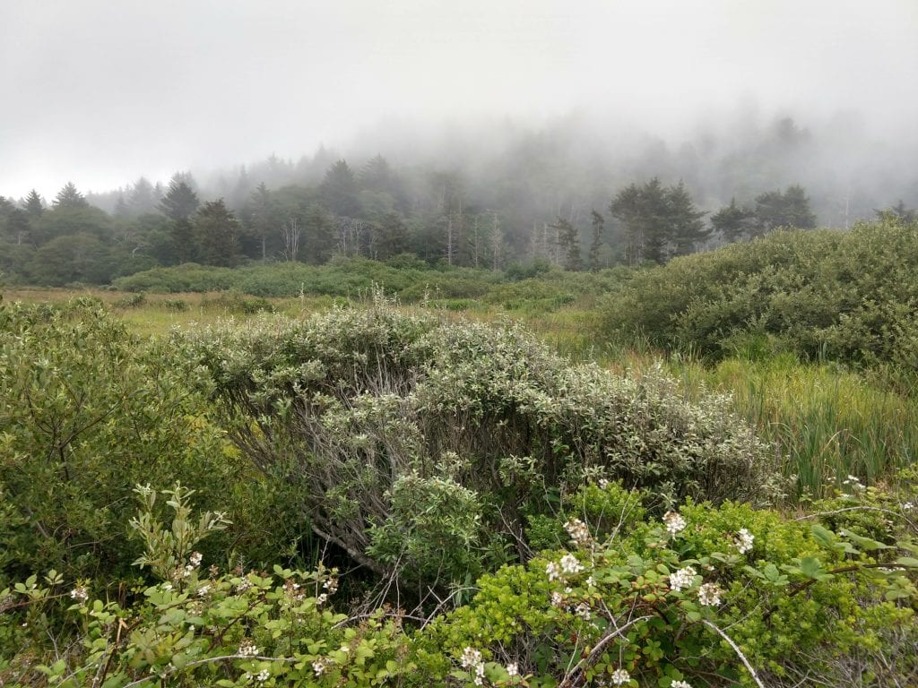 Fog at Thomas H. Kuchel Visitor Center