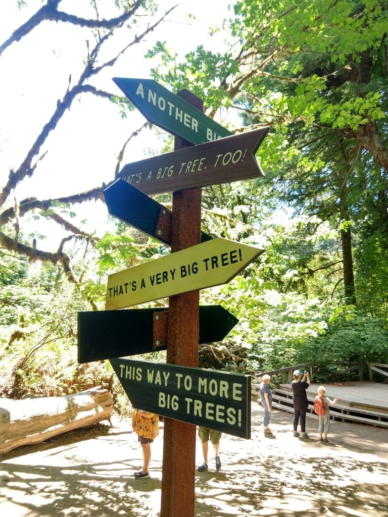 Signs at the Big Tree